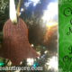 Cinnamon Clove Nutmeg Salt Dough Ornaments
